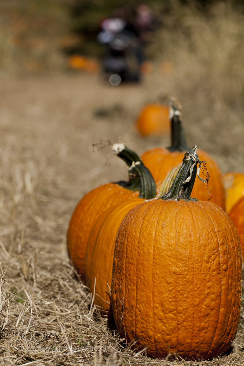 Photograph Offerings for the Great Pumpkin by Edward Kreis on 500px