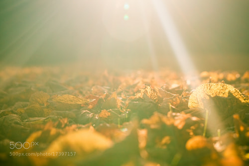 Photograph Sunshine by Andre Gierke on 500px