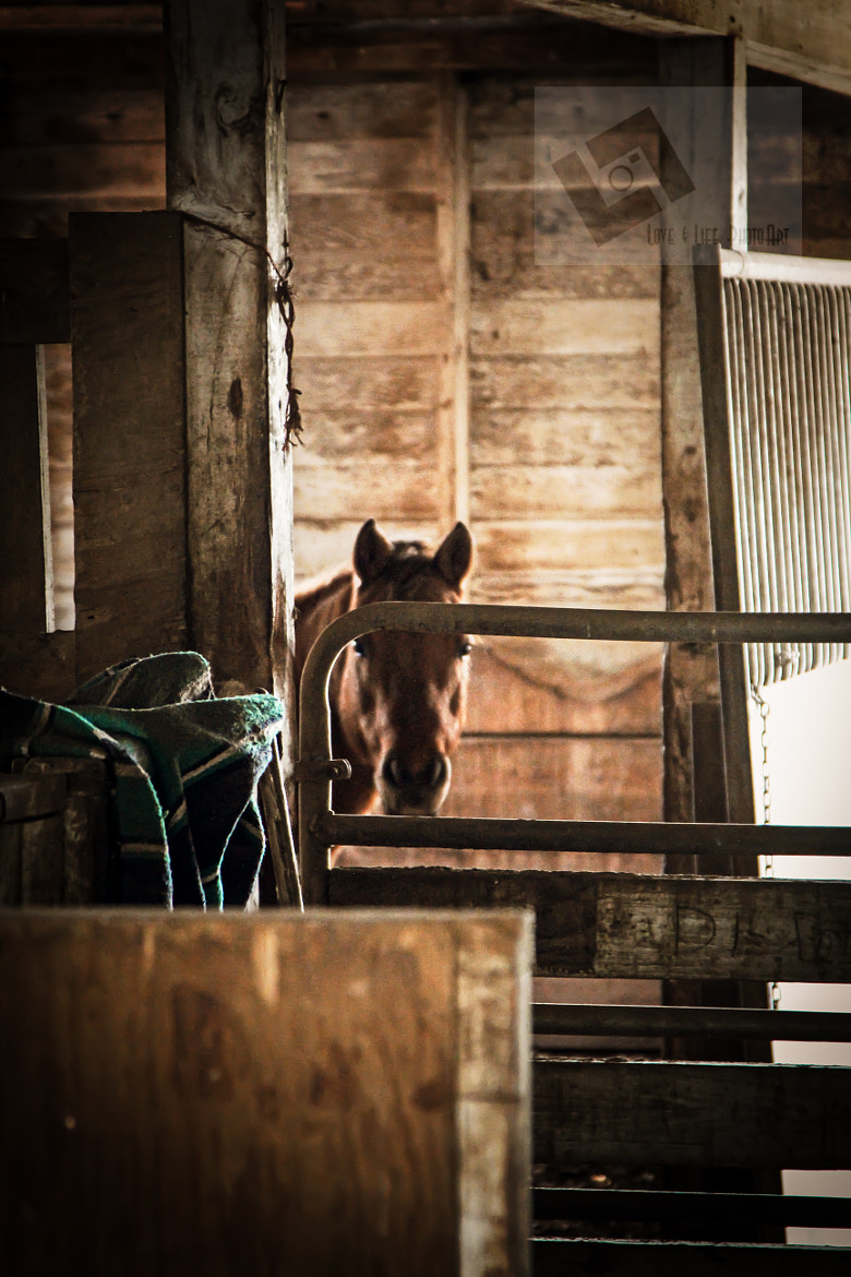 Photograph Stranger in the stable by Michelle  Schultz on 500px