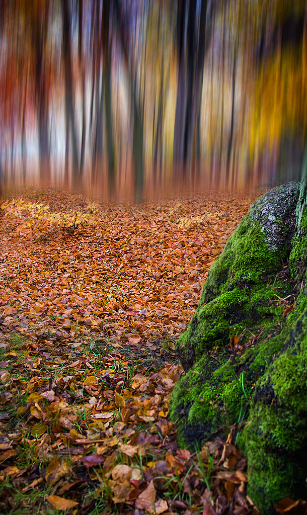 Photograph Sharp forrest? by Mikael Sundberg on 500px