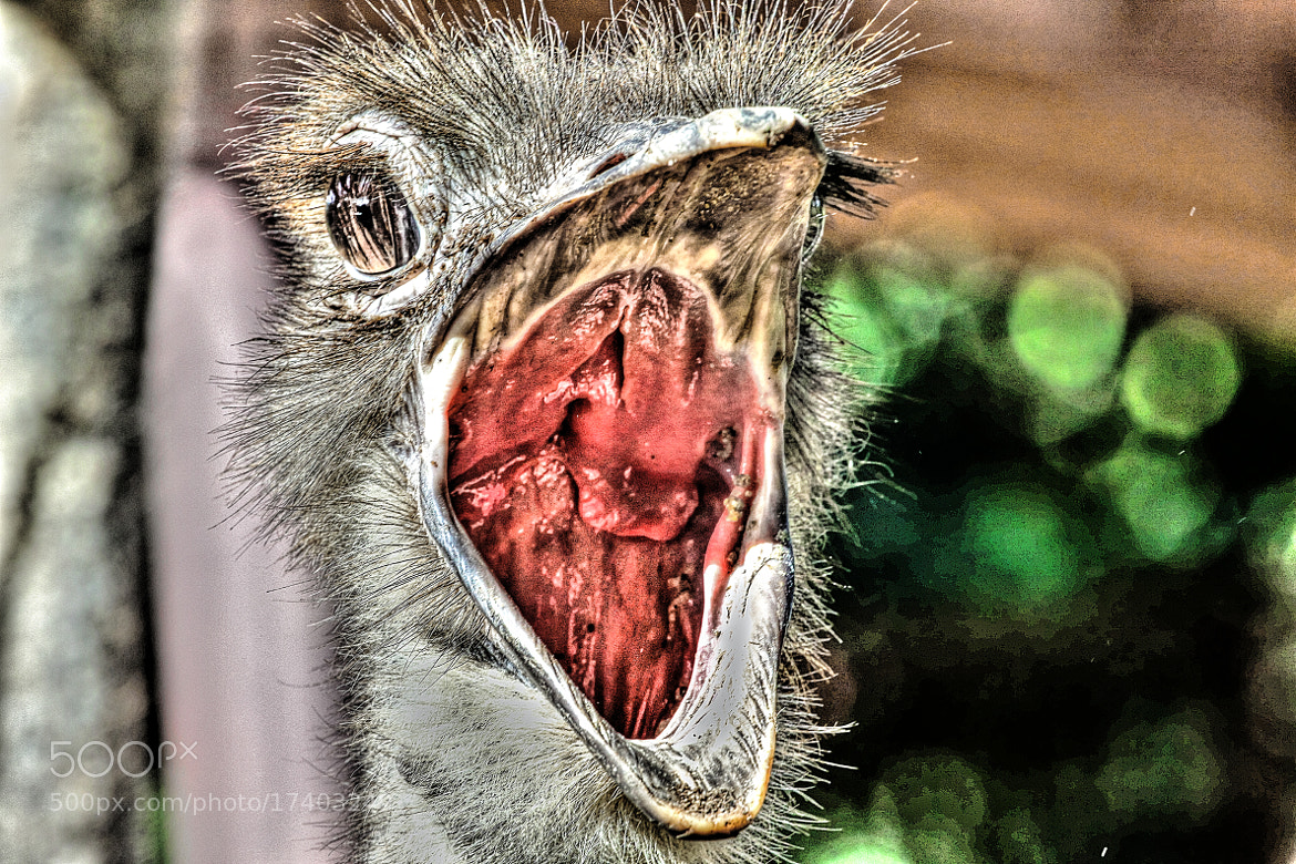 "Photograph say ""Ahhhhhh"" by dave balisi on 500px"