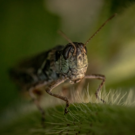 All Creatures Great and, Canon EOS 70D, Tamron SP AF 90mm f/2.8 Di Macro