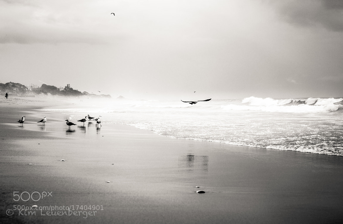 Photograph I wanna fly away by Kim Leuenberger on 500px