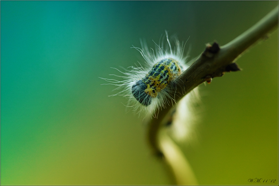 Photograph Hair.. by Wil Mijer on 500px