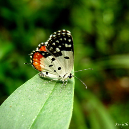 Butterfly, Canon POWERSHOT A495