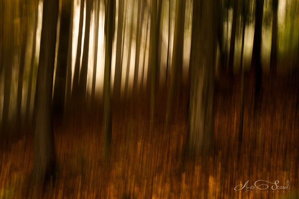 Photograph Mystical forest by Anita Stizzoli on 500px