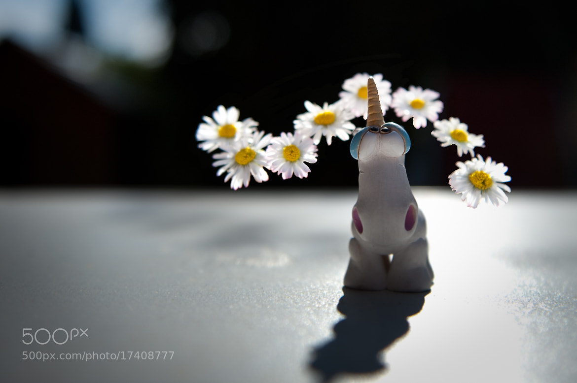 Photograph Unicorn by Acoustic pictures on 500px