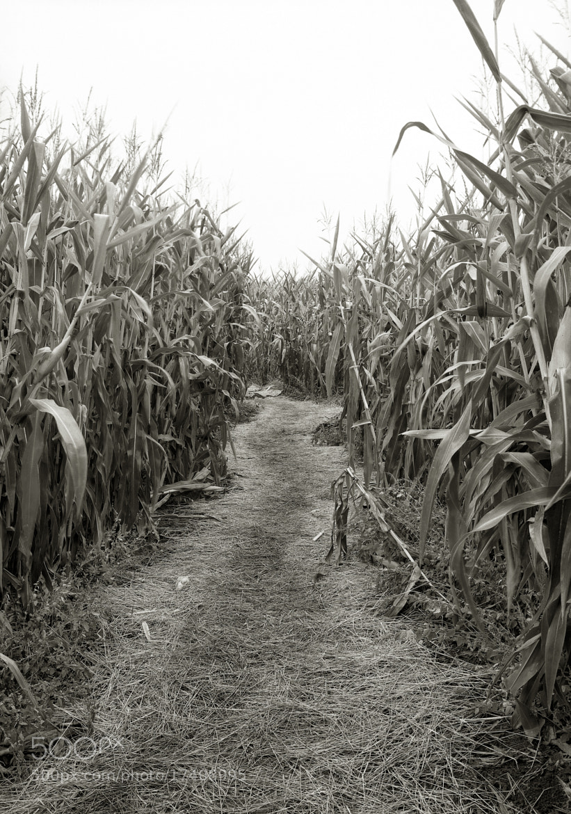 Photograph In a Cornmaze, Sauvie Island by Austin Granger on 500px