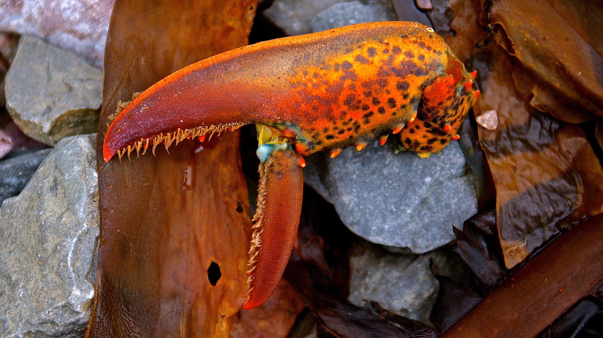 Photograph Crab Claw by Zack Parton on 500px