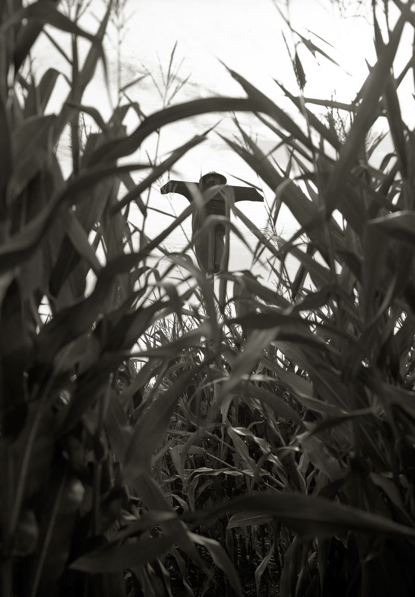 Photograph Scarecrow, Sauvie Island by Austin Granger on 500px