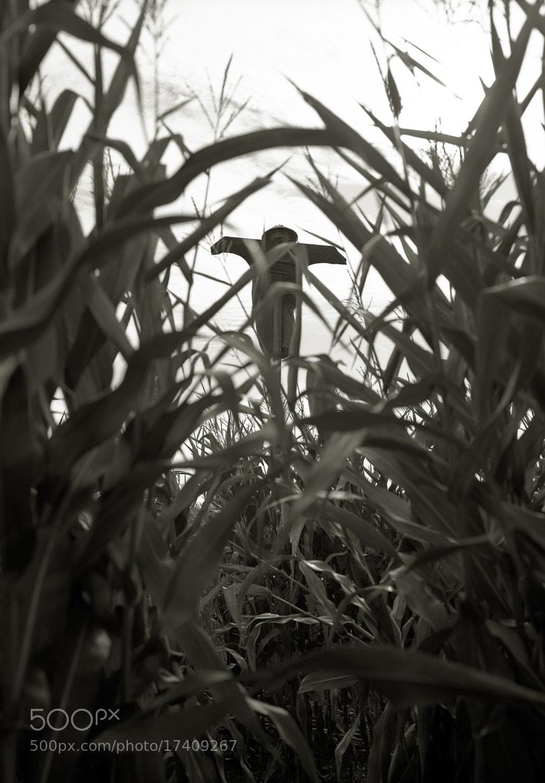 Photograph Scarecrow, Sauvie Island by Austin Granger on 500px