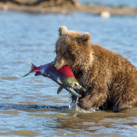 Good fish, Canon EOS 5D MARK III, Canon EF 600mm f/4L IS