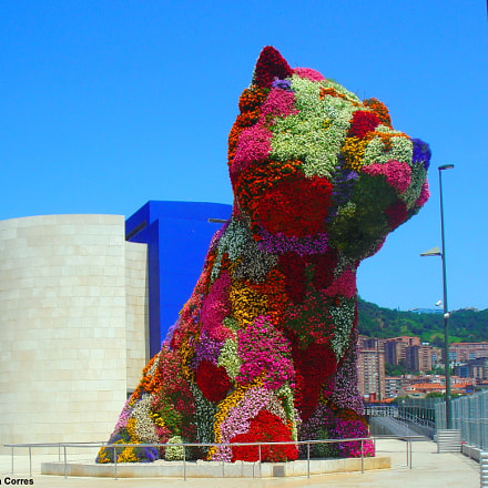 Puppy by Jeff Koons, Sony DSC-W100