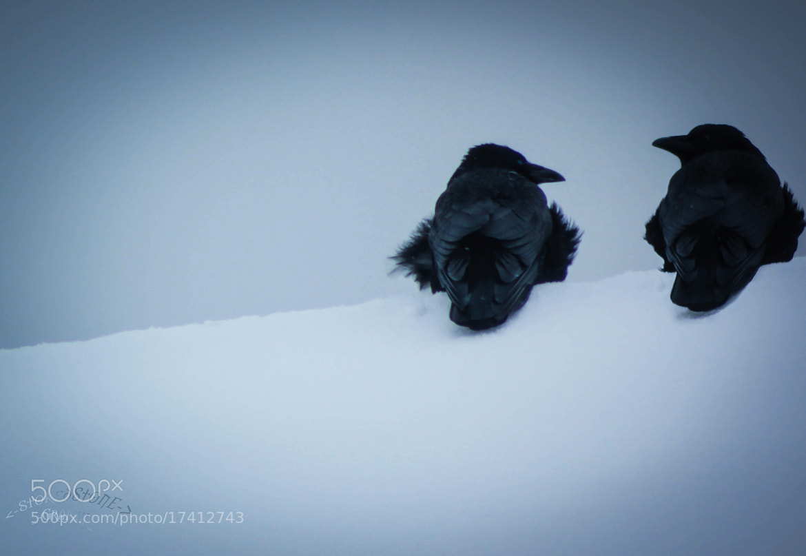 Photograph winter is coming by Ralf Steinbrück  on 500px