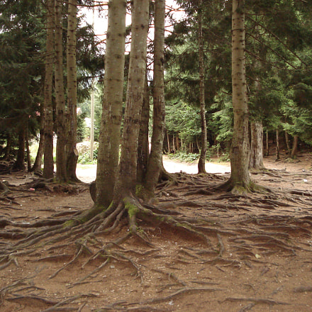 complex roots, Sony DSC-W40