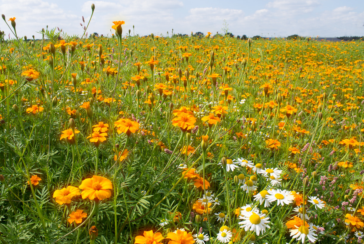 Photograph Field of flowers by Roel Verbunt on 500px
