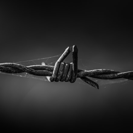 Barbed Wire, Sony SLT-A77V, Tamron SP 90mm F2.8 Di Macro 1:1 USD
