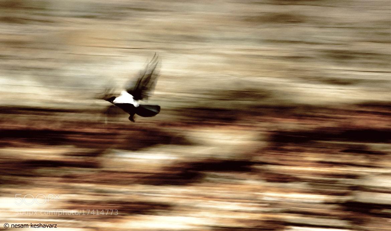 Photograph crow by Nesam Kz on 500px