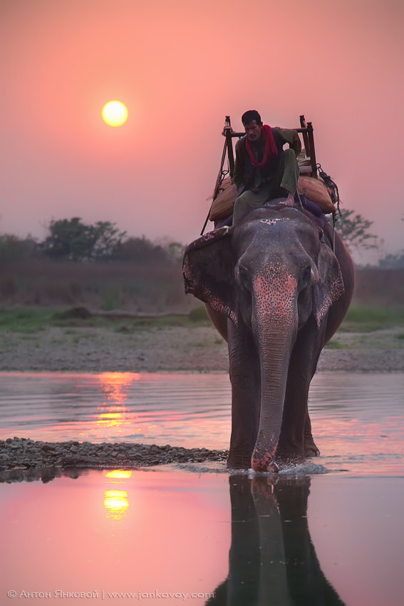 Photograph Pink Elephant by Anton Jankovoy on 500px