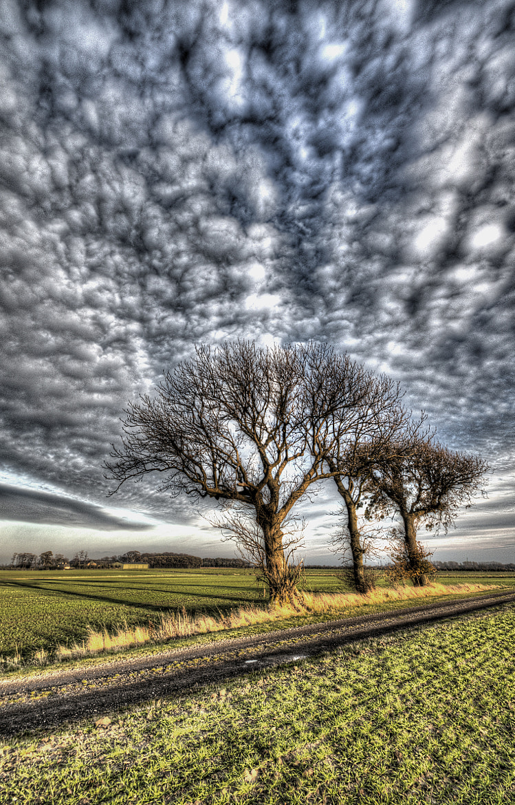 Photograph Three trees! by Kim Schou on 500px