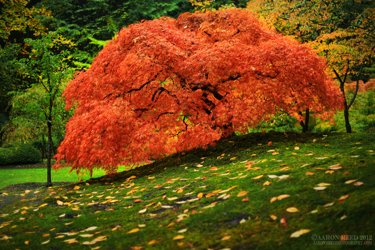 Photograph The Life Of A Tree by Aaron Reed on 500px
