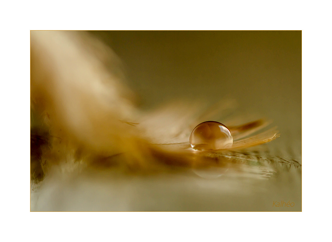 Photograph Goutte automnale by florence Kalheo on 500px