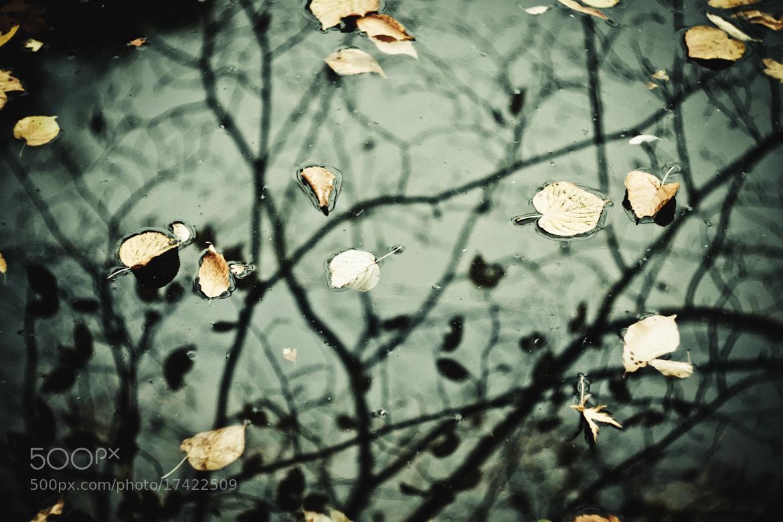 Photograph Осень by Natalia Previdi on 500px