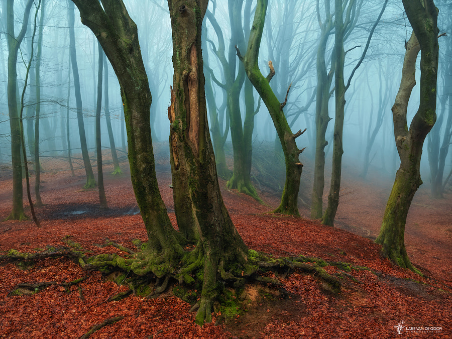 A Misty Invitation by Lars van de Goor on 500px.com