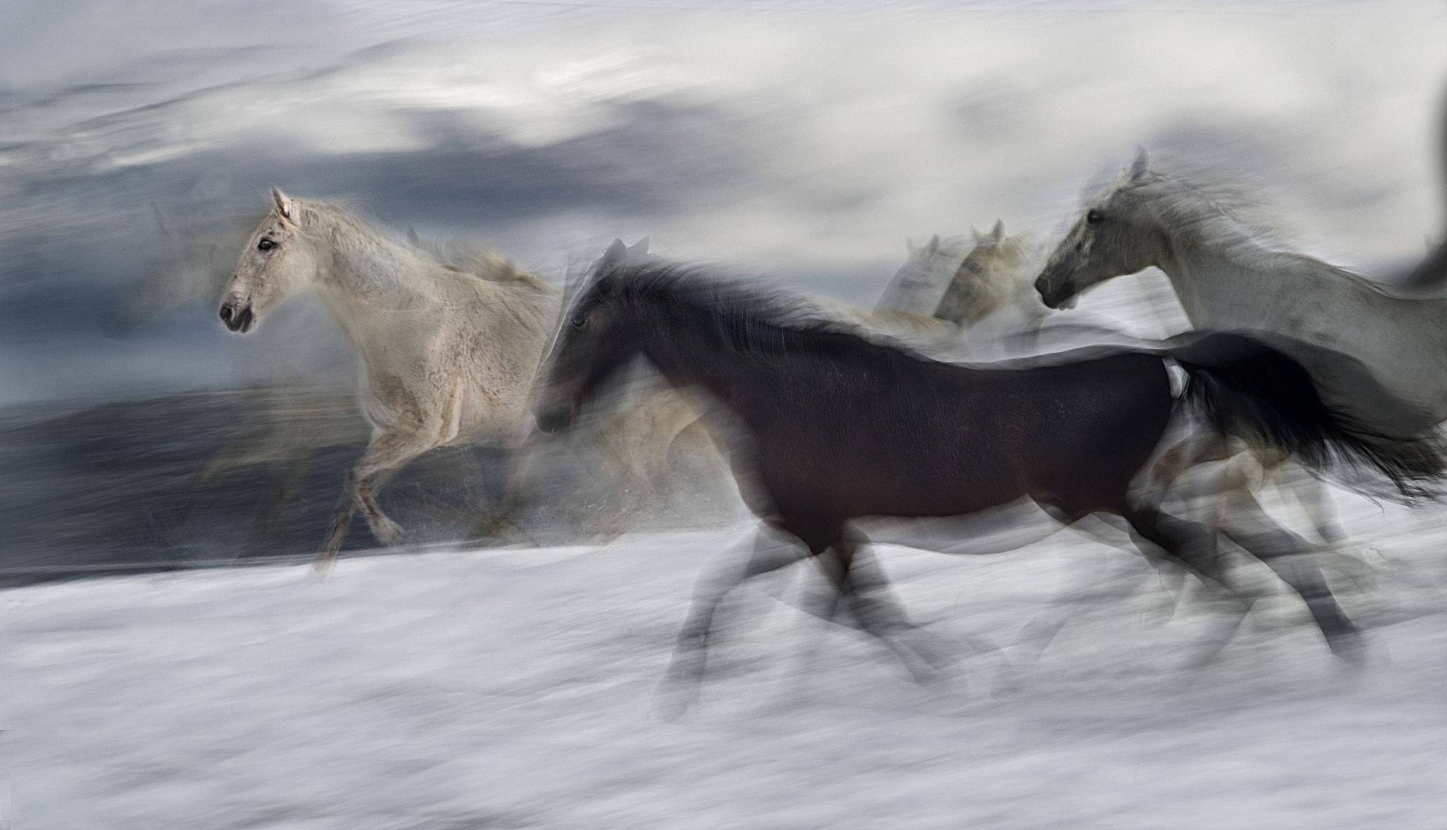 Photograph Gallop in snow by Milan Malovrh on 500px