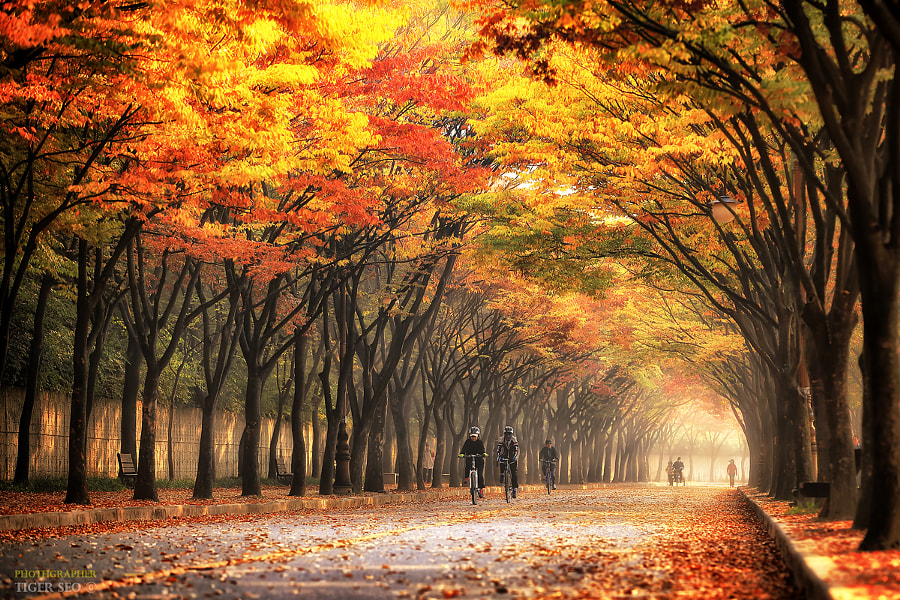 Autumn color #2 by Tiger Seo on 500px.com