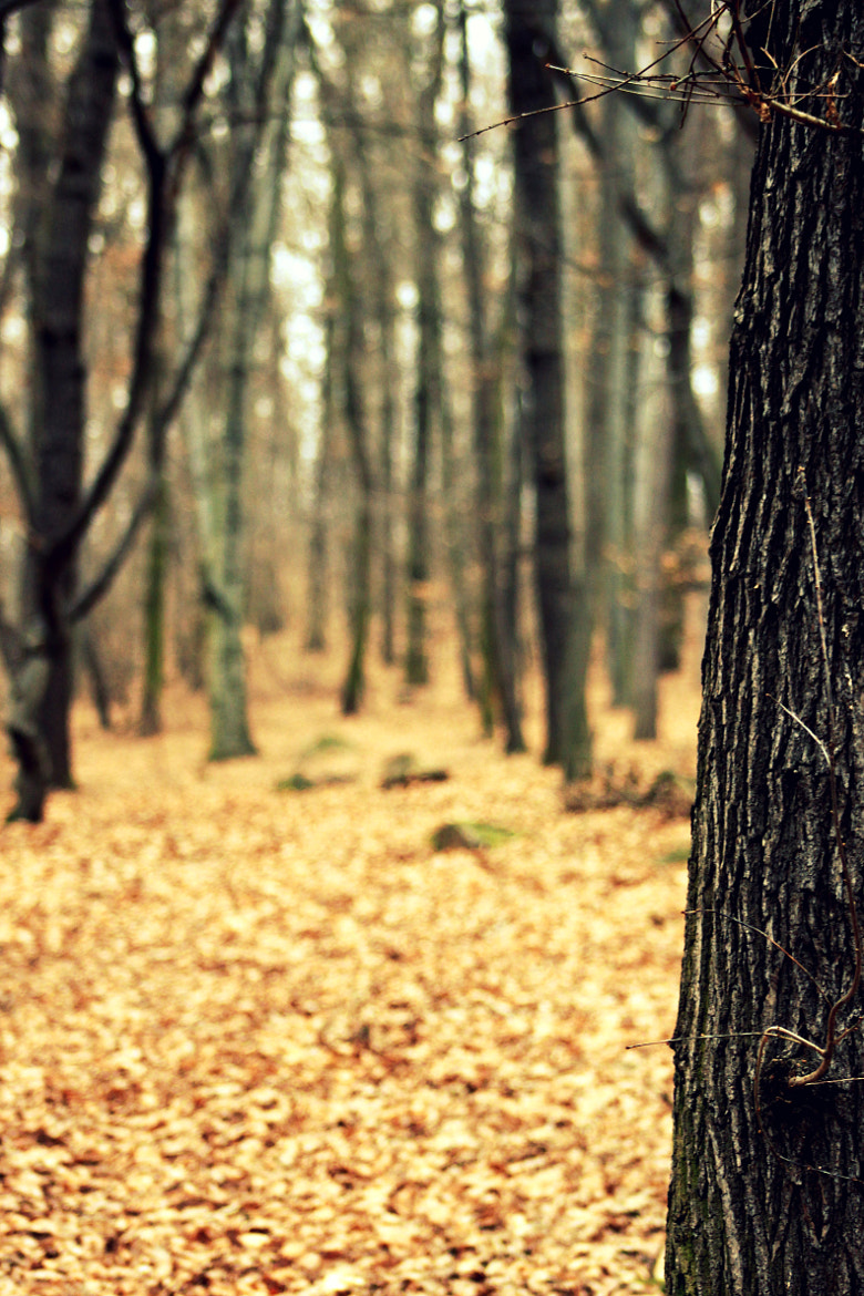 Photograph Autumn in Middleboys by Michal Neumann on 500px