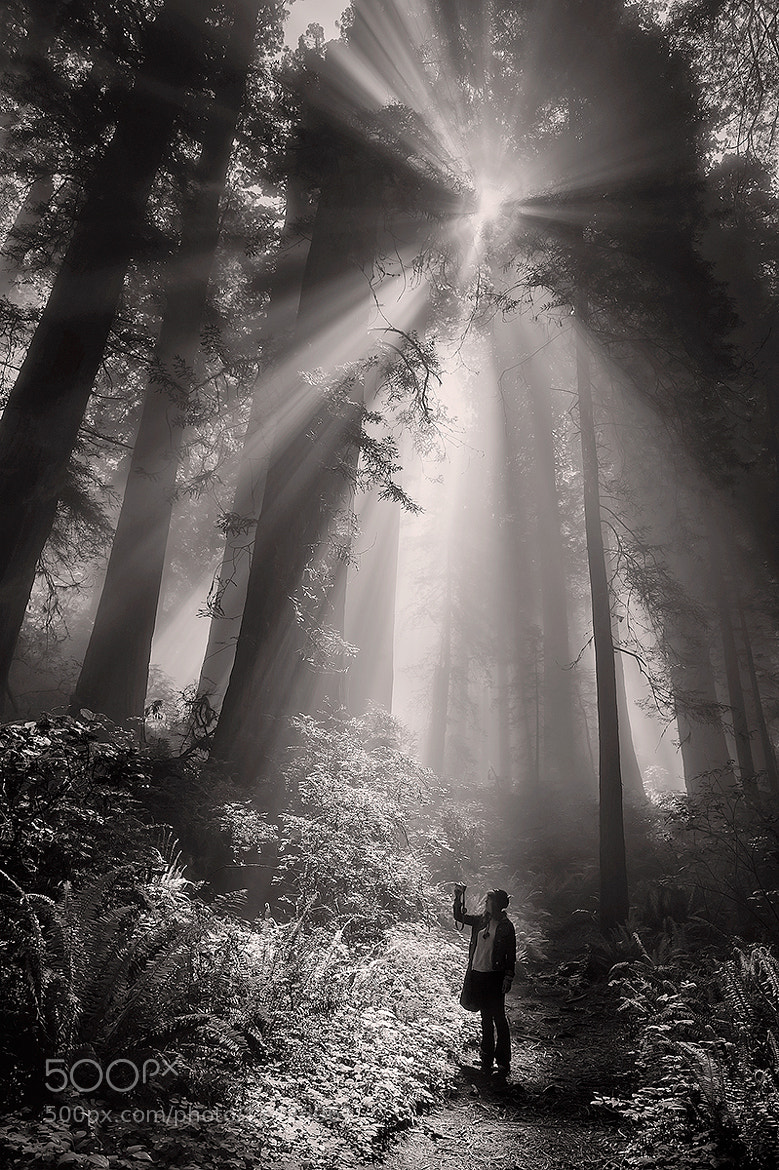 Photograph The Redwoods by Deb Harder on 500px