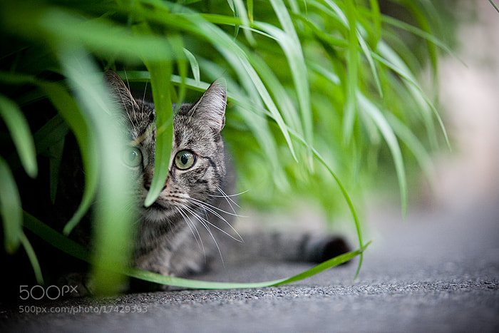 Photograph hide&seek ;-)  by Stefanie Lategahn on 500px