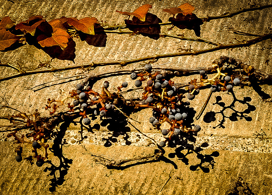 Some charm about this exterior wall at the Ford Mansion caught my eye--fall sunrise, rugged texture, clinging vine berries, orange leaves. Not sure if it catches your eye but for some reason it did mine.