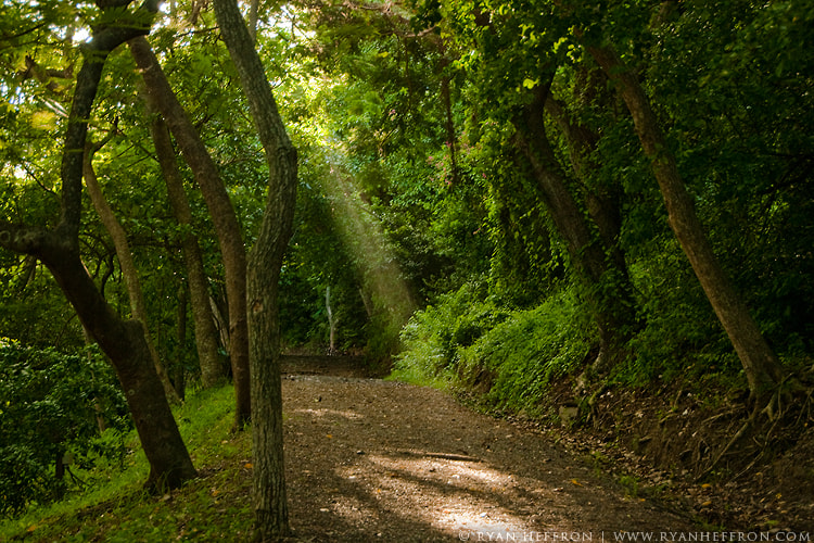 Photograph Forest Light by Ryan Heffron on 500px