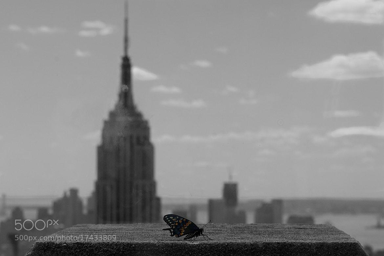 Photograph Mariposa en Manhattan by Jordi Oller Macia on 500px