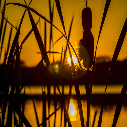 Sunset Cattail, Sony ILCE-7, Sigma ZOOM-alpha 35-135mm F3.5-4.5