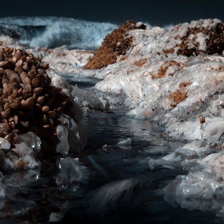 Infrared Seaweed, Canon EOS D60
