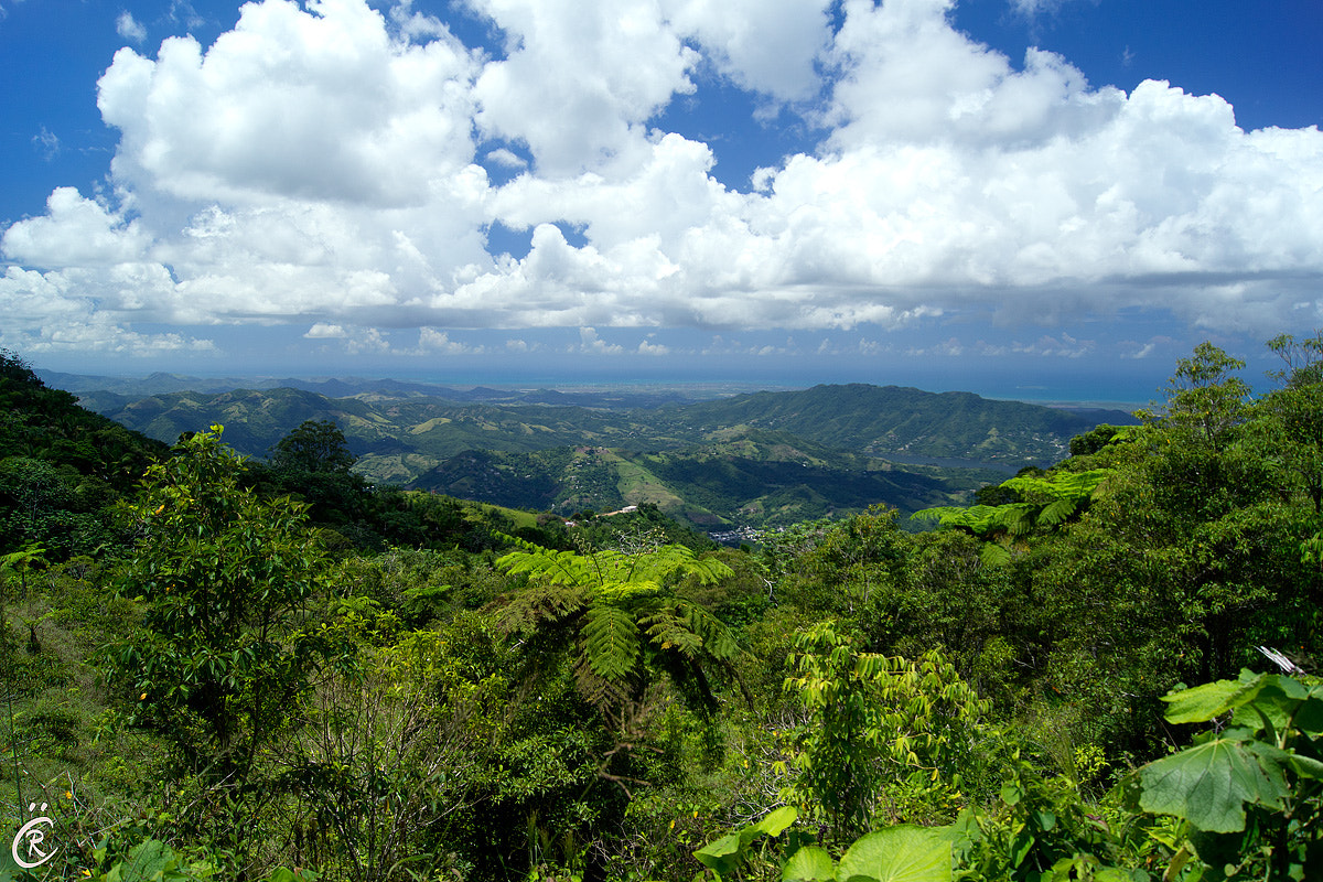 Photograph View from Toro Negro Forest by Raul Calvo on 500px