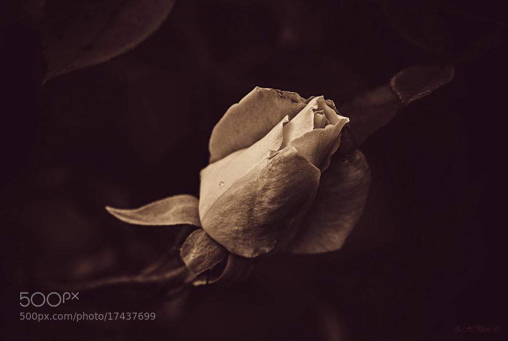 Photograph La Vie en rose by Zdravko  Horvat on 500px