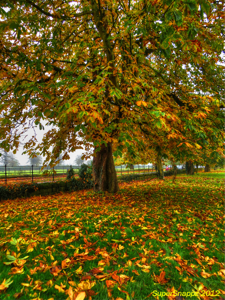 Photograph Autumn Tree by Anthony  on 500px