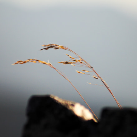 Little Twig, Canon EOS 550D, Canon EF 70-210mm f/4