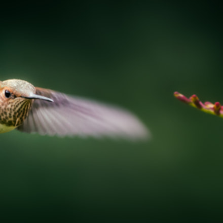 In the Air, Canon EOS 70D, Canon EF 80-200mm f/2.8L