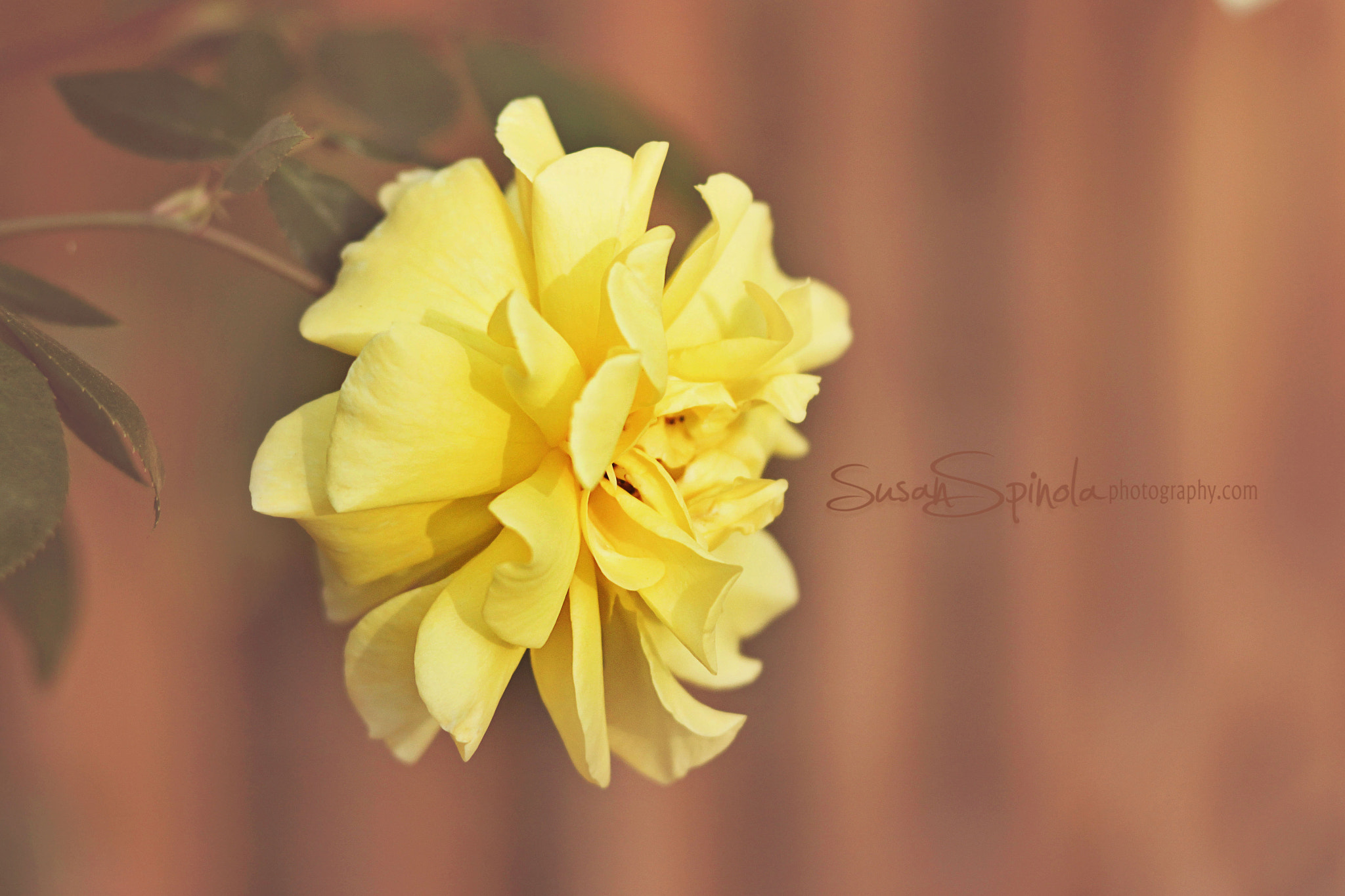 Photograph Yellow  by susan spinola on 500px