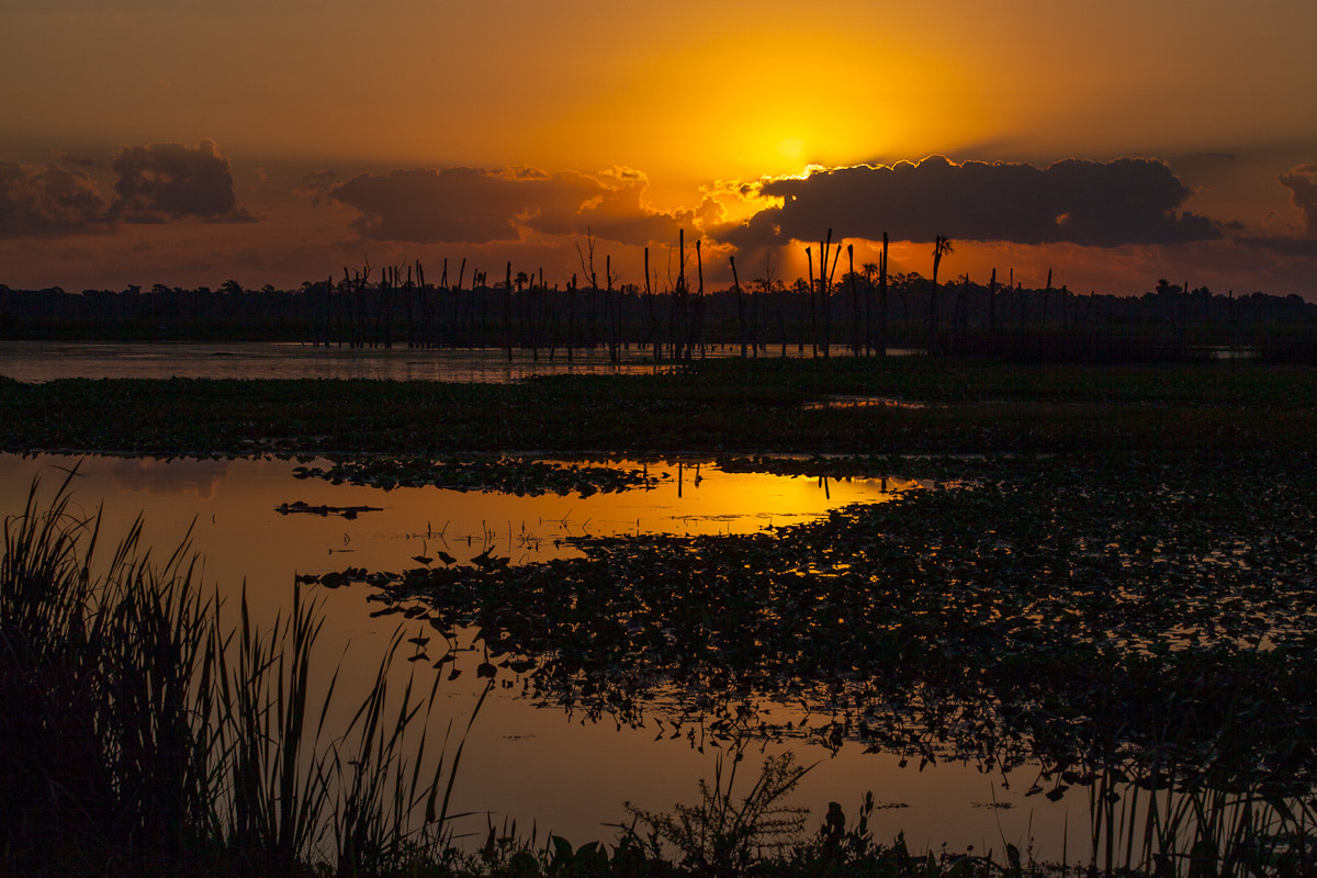 Photograph Orlando Wetlands by Stefan Åberg on 500px