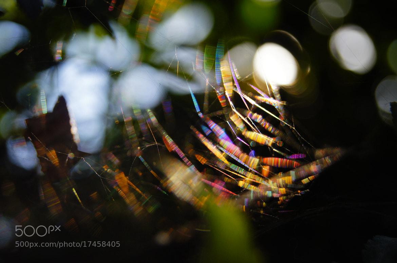 Photograph rainbow webs. by Afzal Khan on 500px