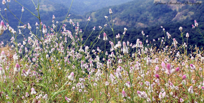 Photograph Beautiful wild flowers by Goutam Shankar on 500px