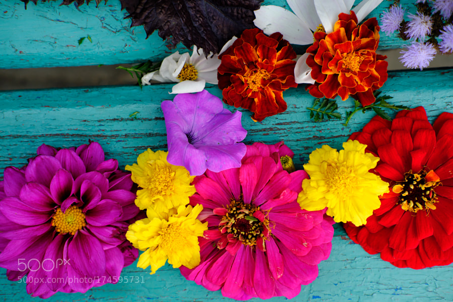 the beauty of colorfull flowers