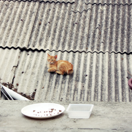 Cat on the roof, Pentax *IST DL, PENTAX-F 28-80mm F3.5-4.5
