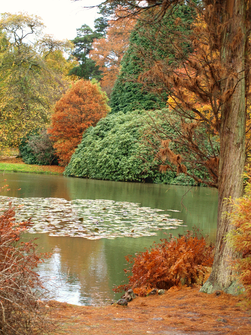 Photograph Sheffield Park Gardens by Julie Mewett on 500px